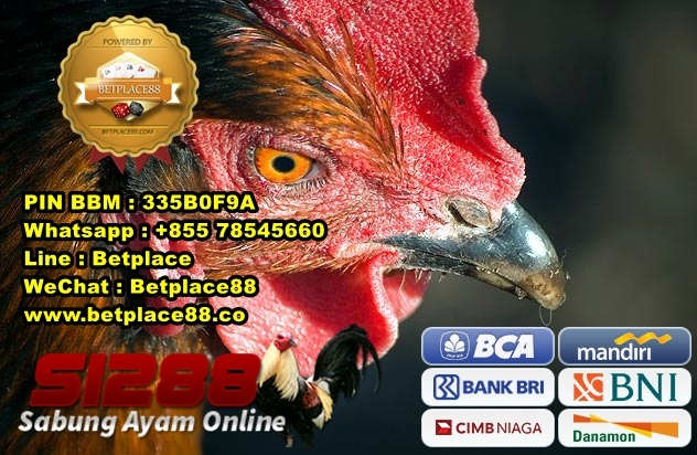 Withdraw Sabung Ayam S1288